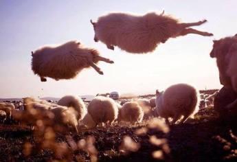 pecore volanti