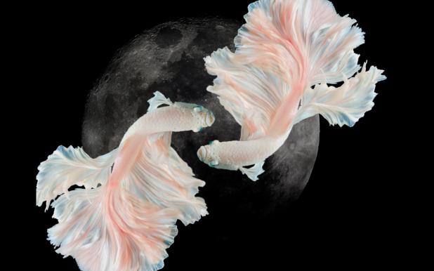 luna nuova pesci